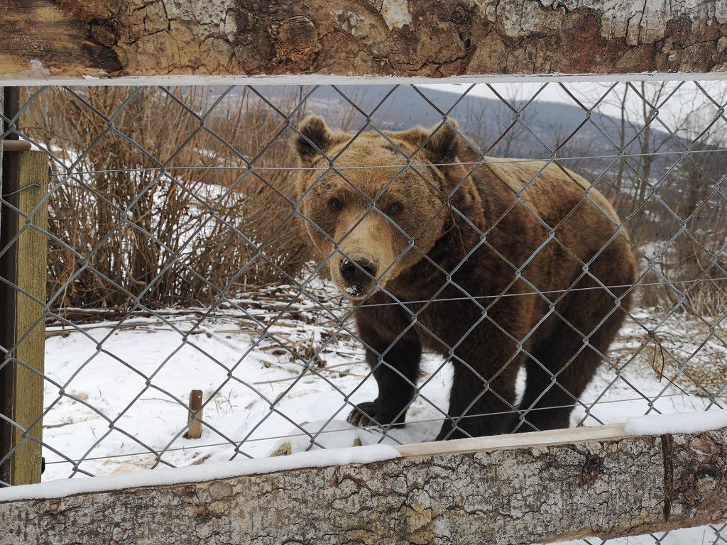 Kuterevo, Bear Sanctuary, Velebit, NP Northern Velebit, volunteers, gas only, self-gas
